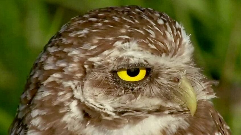 Microplastics Found in Florida Birds of Prey for First Time