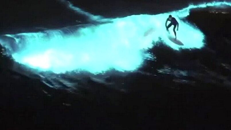 Surfers Catch Glowing Waves in California Red Tide