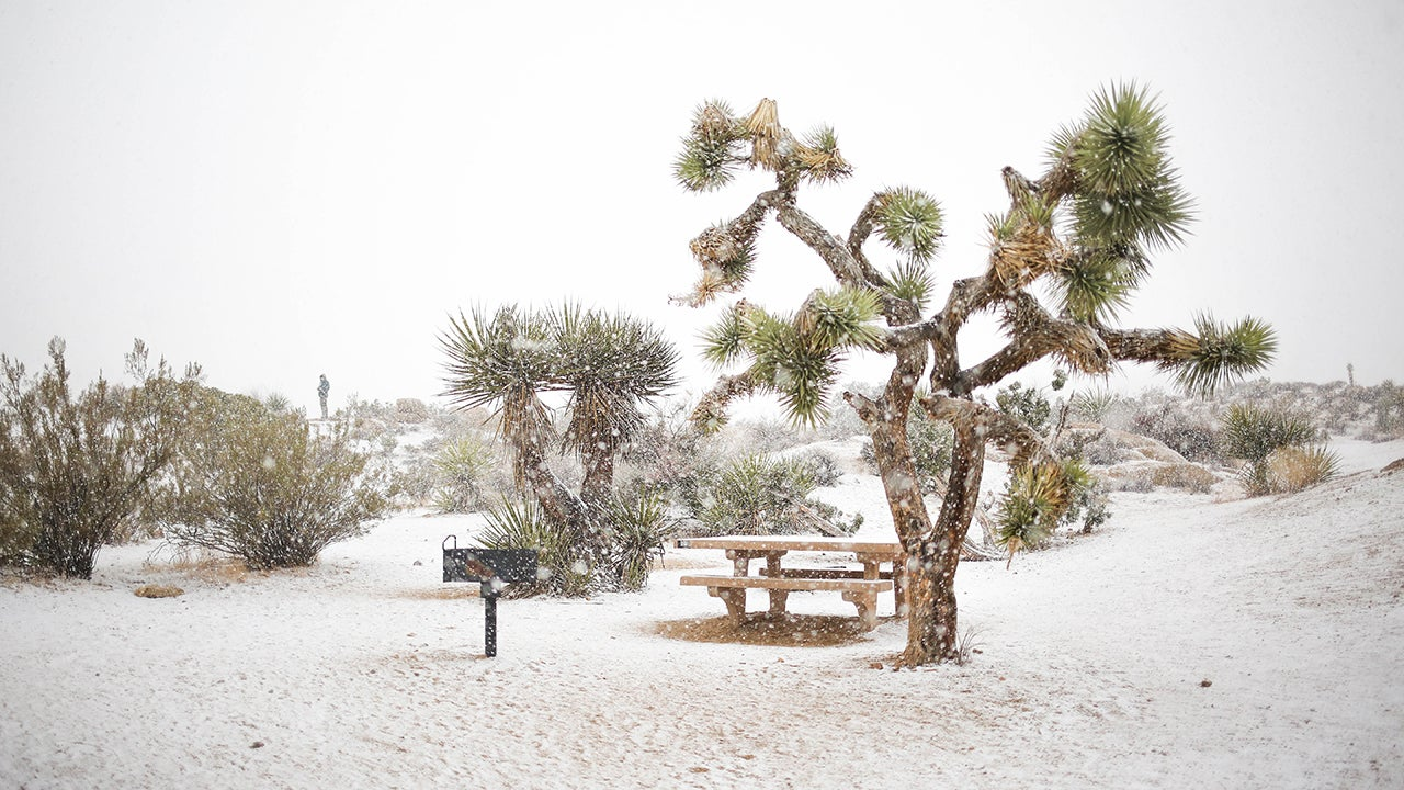 Captivating Photos of Joshua Tree Covered in Snow