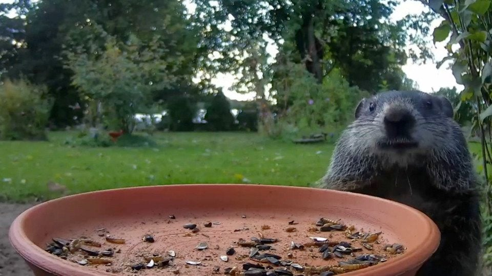 Wildlife Cam Captures Best of Backyard Nature