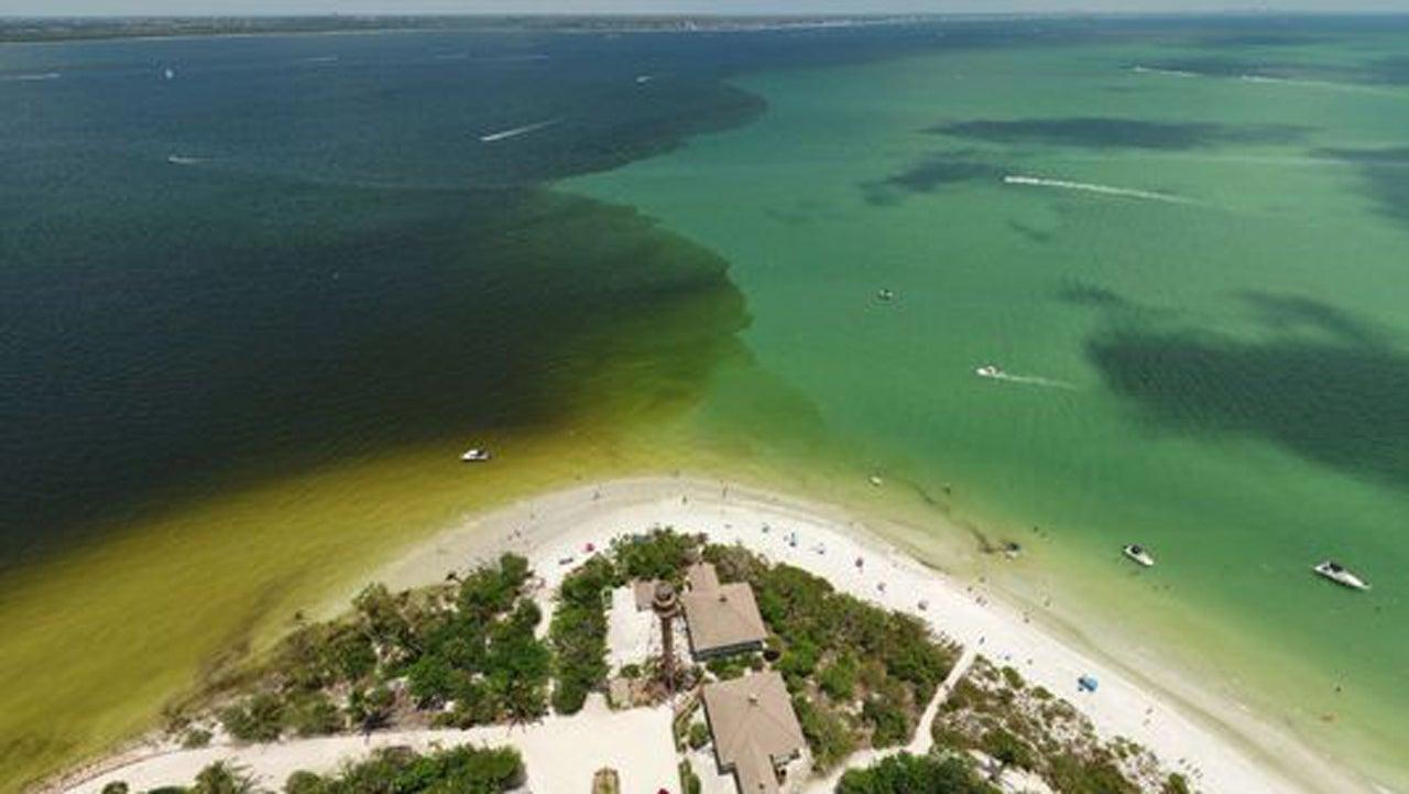 Toxic Algae Found in Florida's Lake Okeechobee