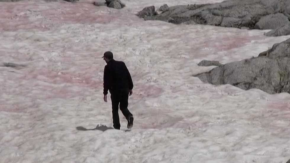 Glacier Turns Pink in Italy, and It's a Bad Sign