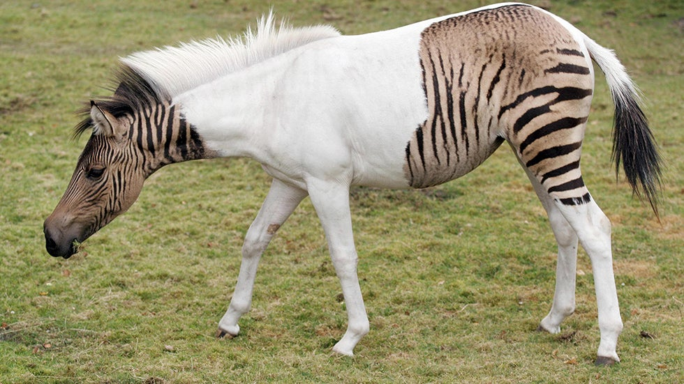 PHOTOS: Amazing Hybrid Animals | The Weather Channel