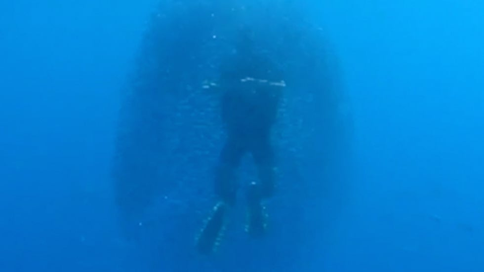 Fish Form Mesmerizing Bait Ball Around Diver in the Red Sea