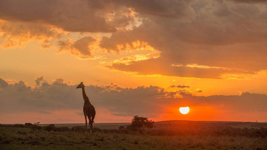Kenias beste Reisezeit: Wunderbares Winter- und Sommerziel