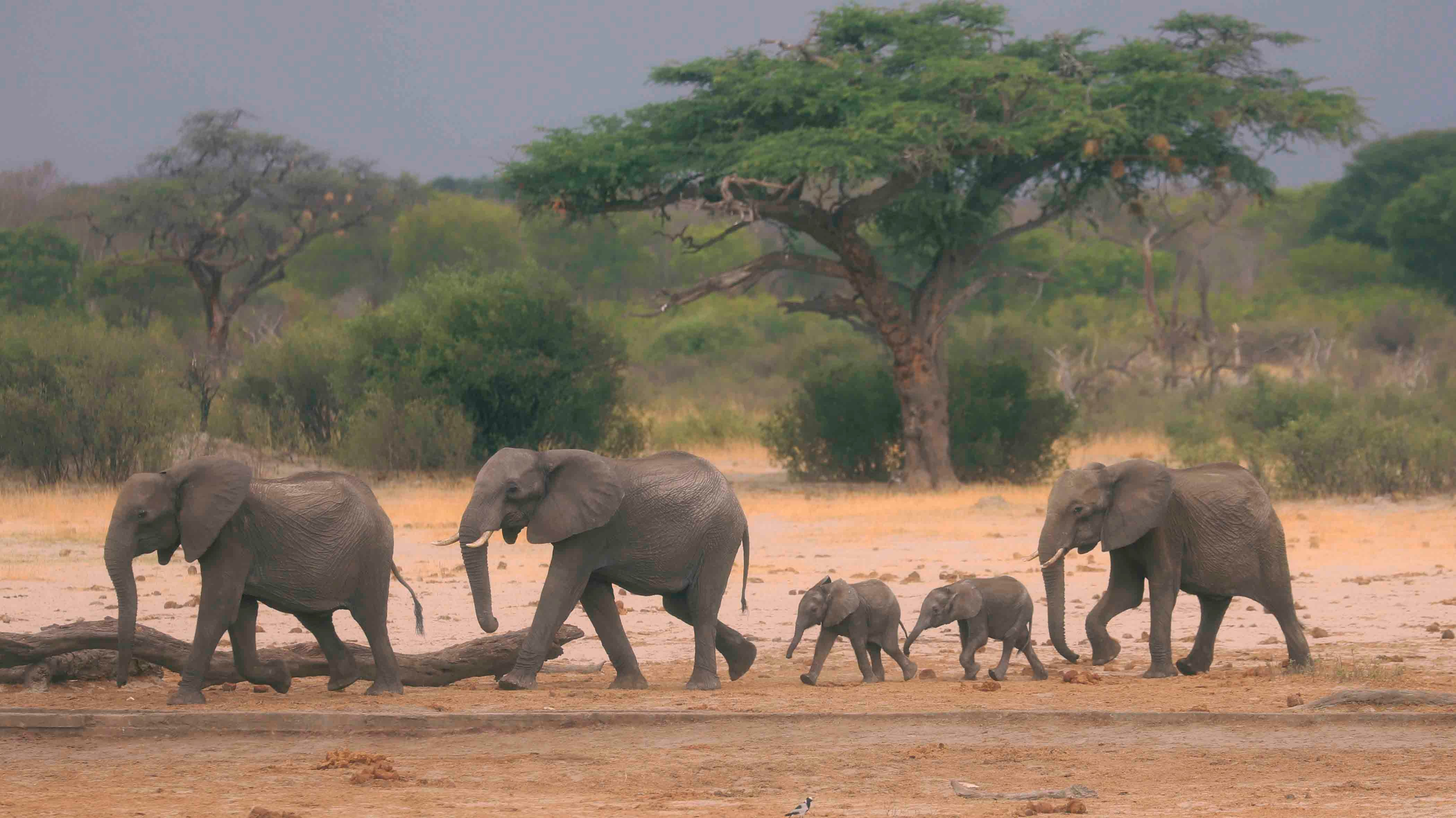 More Than 200 Elephants Die in African Drought