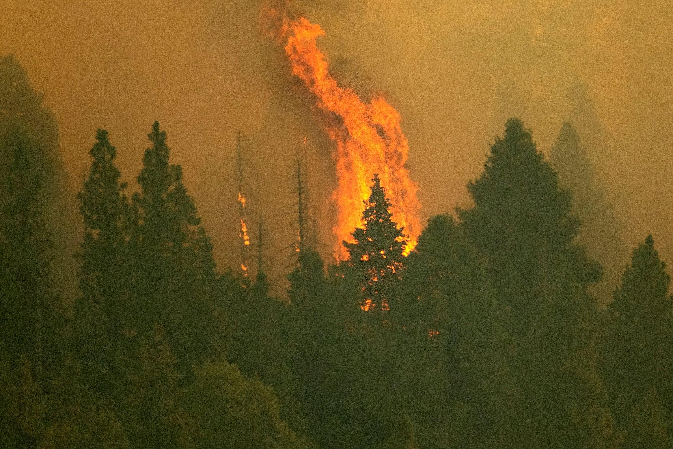 Blazes Threaten California's Giant Sequoias (PHOTOS)