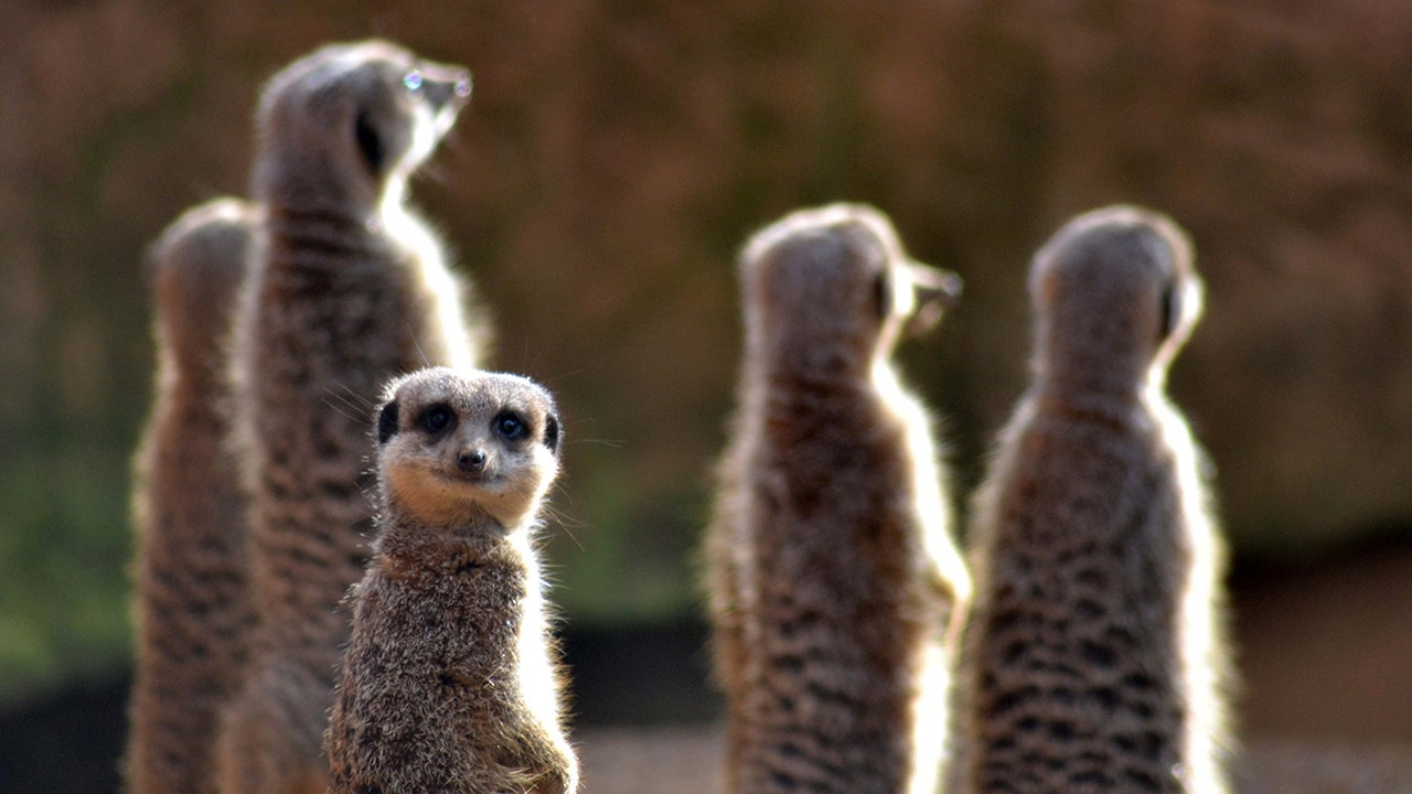 Funny Side Of Wildlife: Entries From The 2015 Comedy