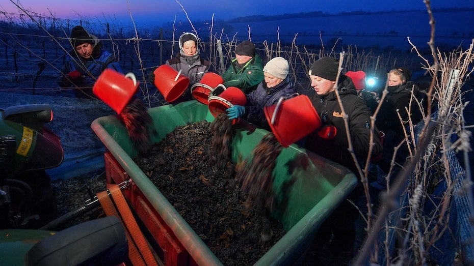 Ice Wine in a Warming World