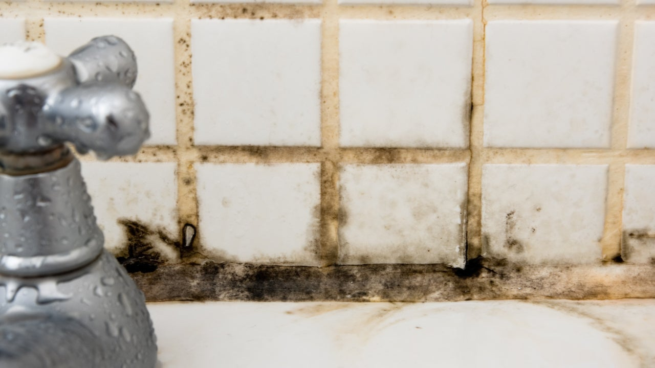A Complete Guide to Identifying and Getting Rid of Mold