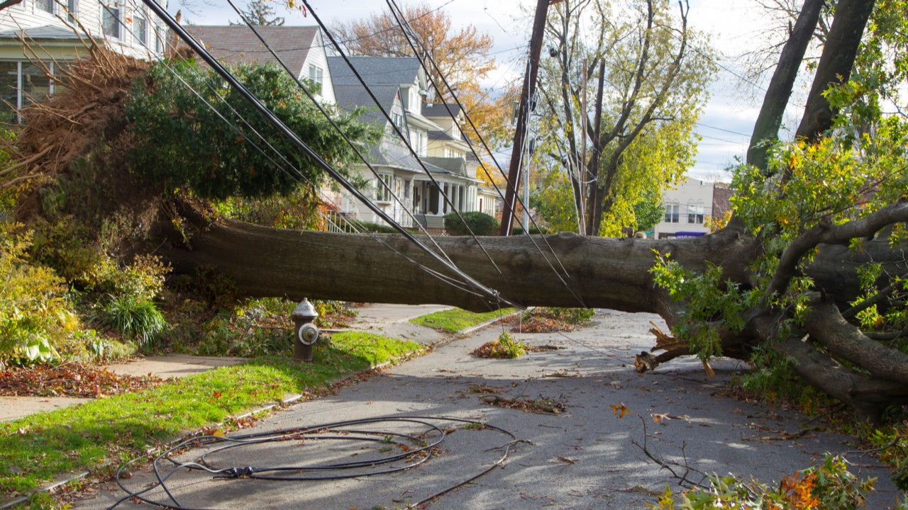 Are the Trees Near Your House a Hazard?