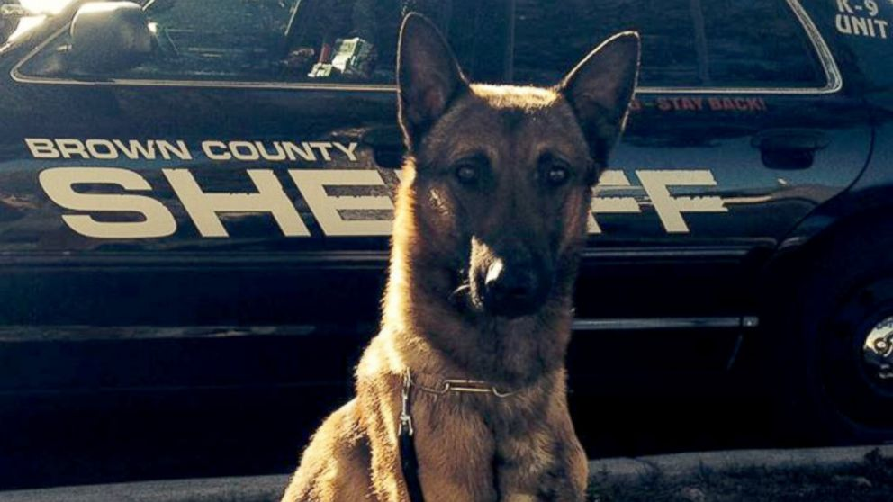 11 Police Dogs Have Died Of Heat Exhaustion This Summer 9 Were Left