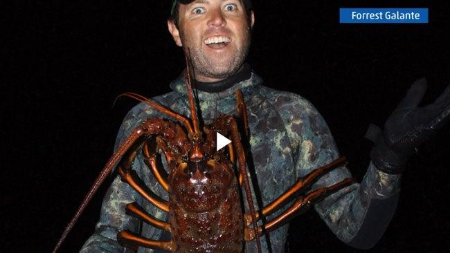 Huge Lobster Captured off California Coast