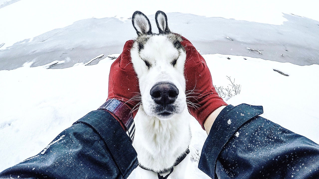 Photographer Chooses the Worst Weather for the Best Husky Photos (PHOTOS)