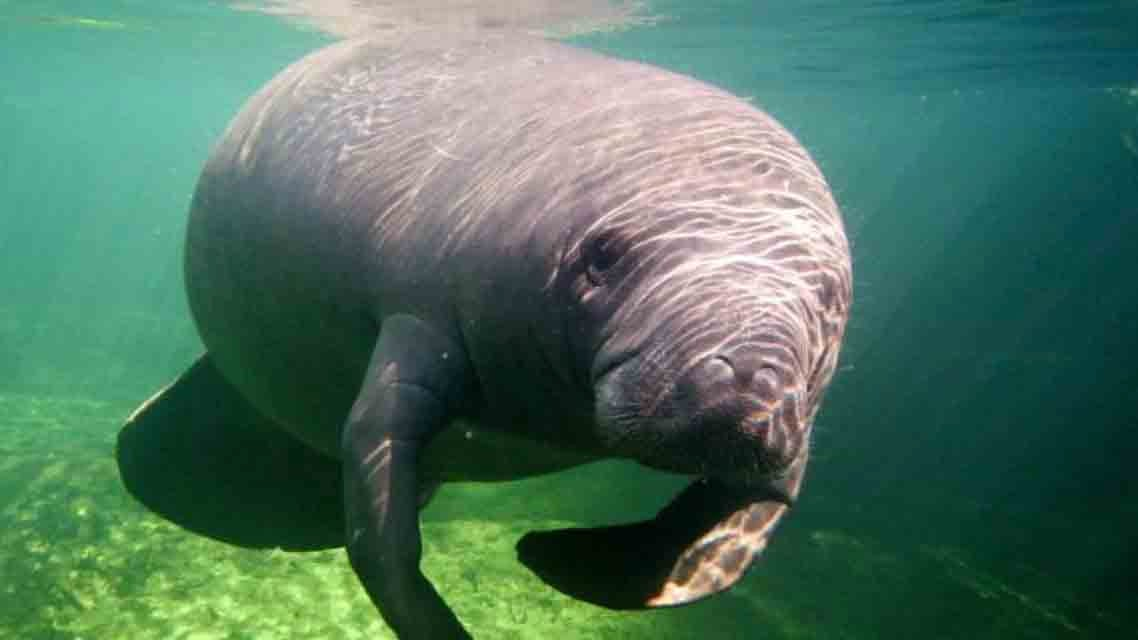 A Manatee Was Found Dead on a New Jersey Beach, Far From ...