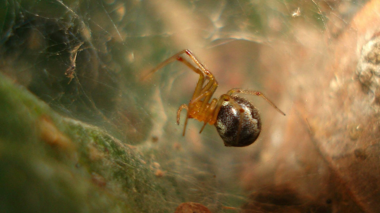 Tropical Cyclones Give Aggressive Spiders a Better Chance of Survival, Study Finds
