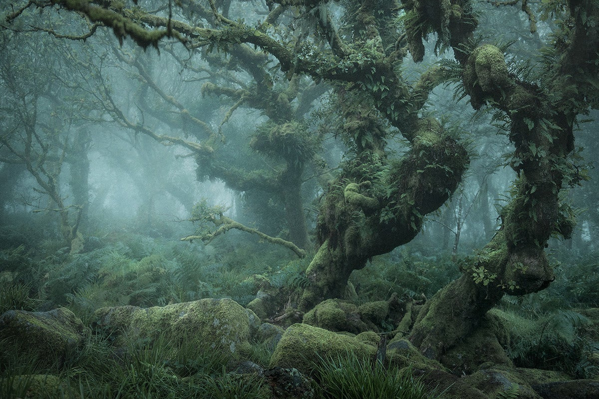 Misty Woodlands Straight out of a Fairytale (PHOTOS)