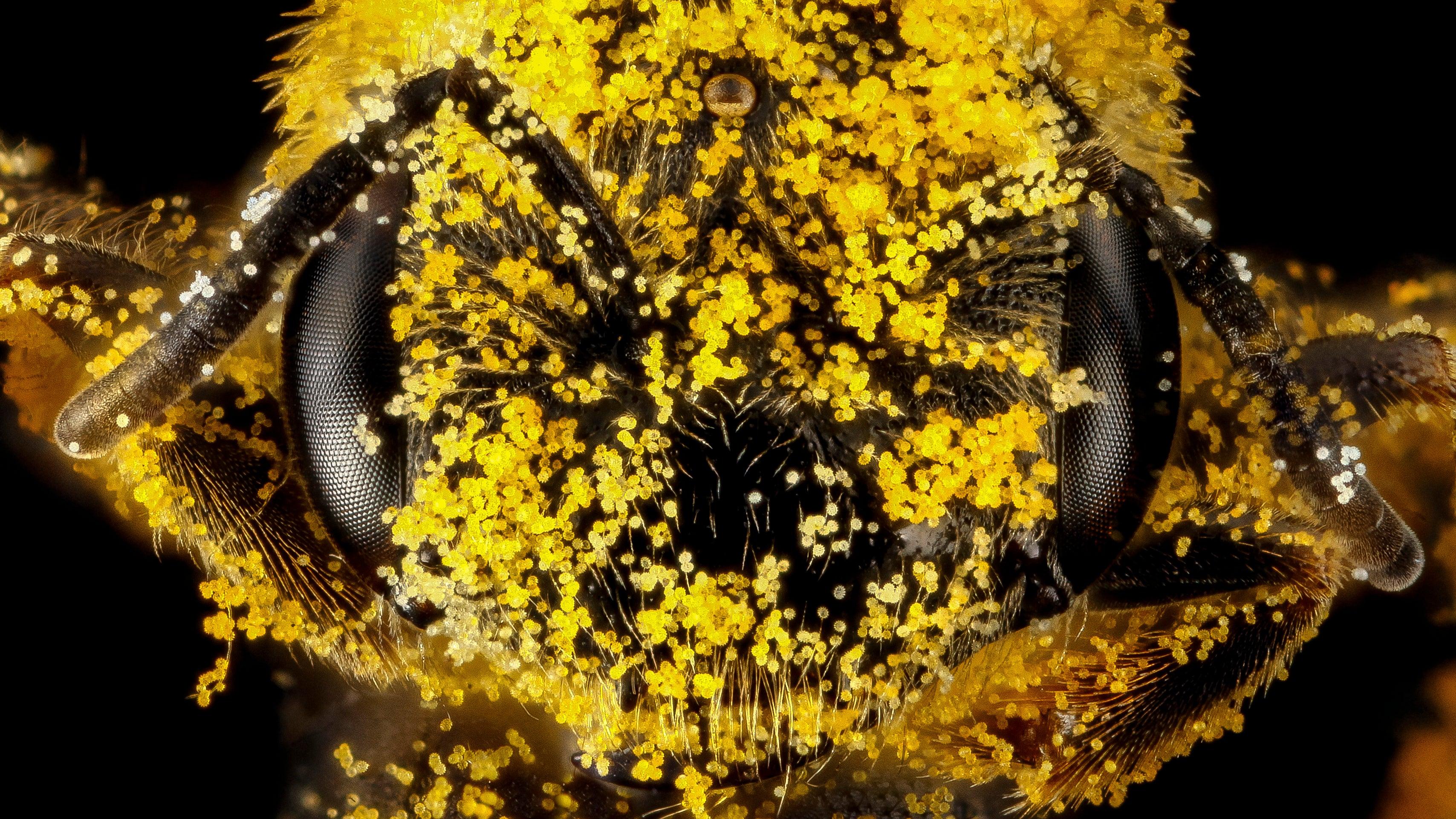 Fotografías de abejas que te harán estornudar