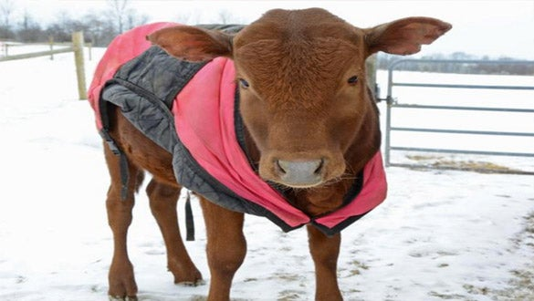 Adorable Farm Animals in Sweaters