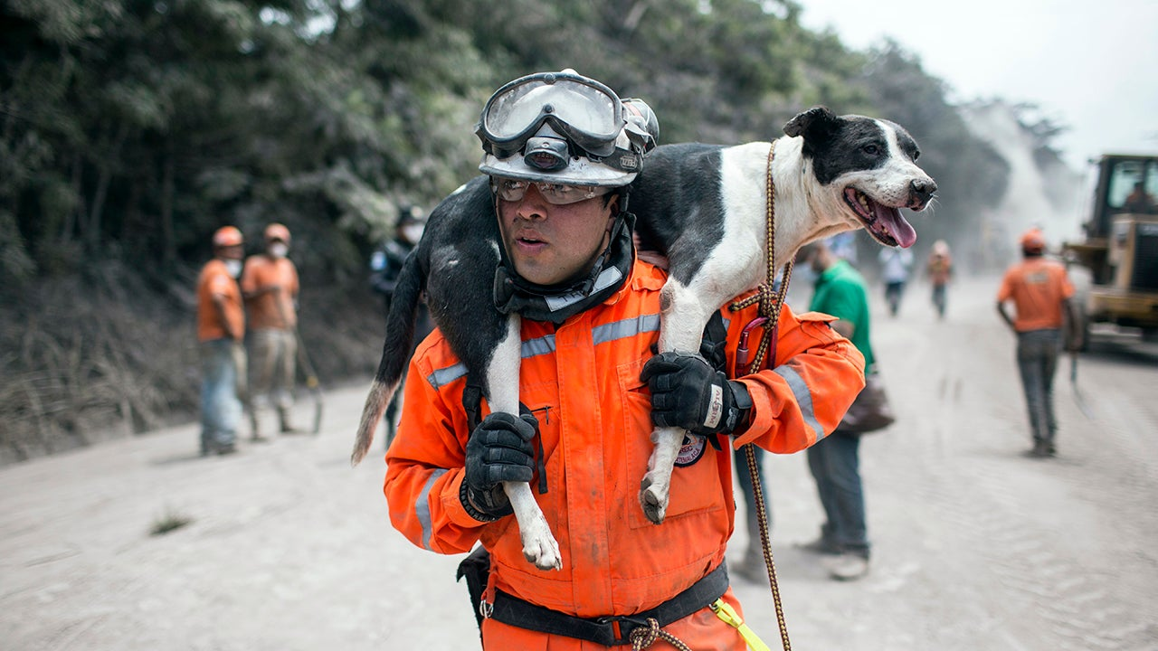 Amazing Animal Rescues in Guatemala (PHOTOS)