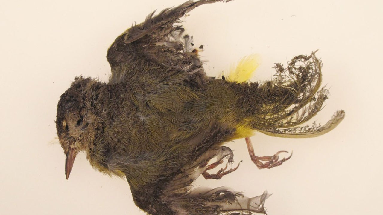New Solar Power Plants Are Incinerating Birds The