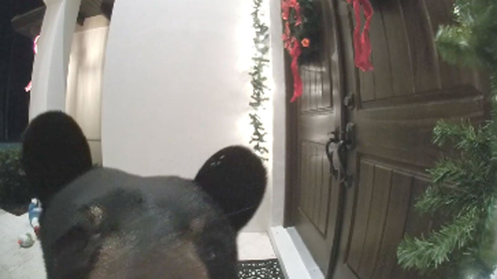 Grinch Bear Rings Florida Family's Doorbell