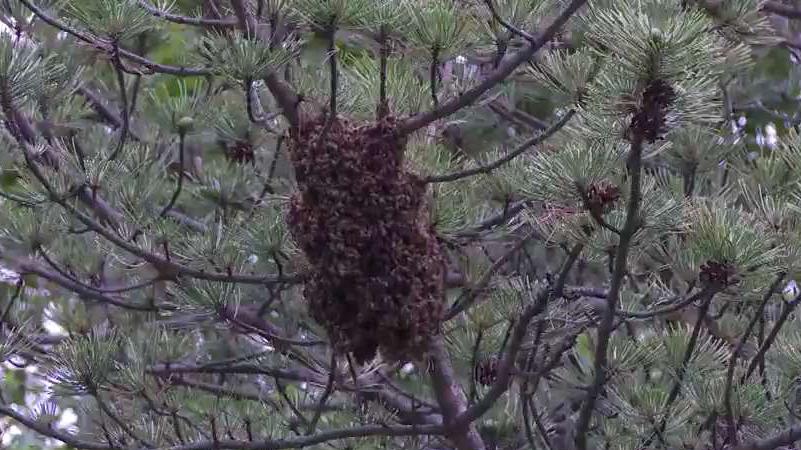 Hurricane Michael Devastated Bee Population in Florida