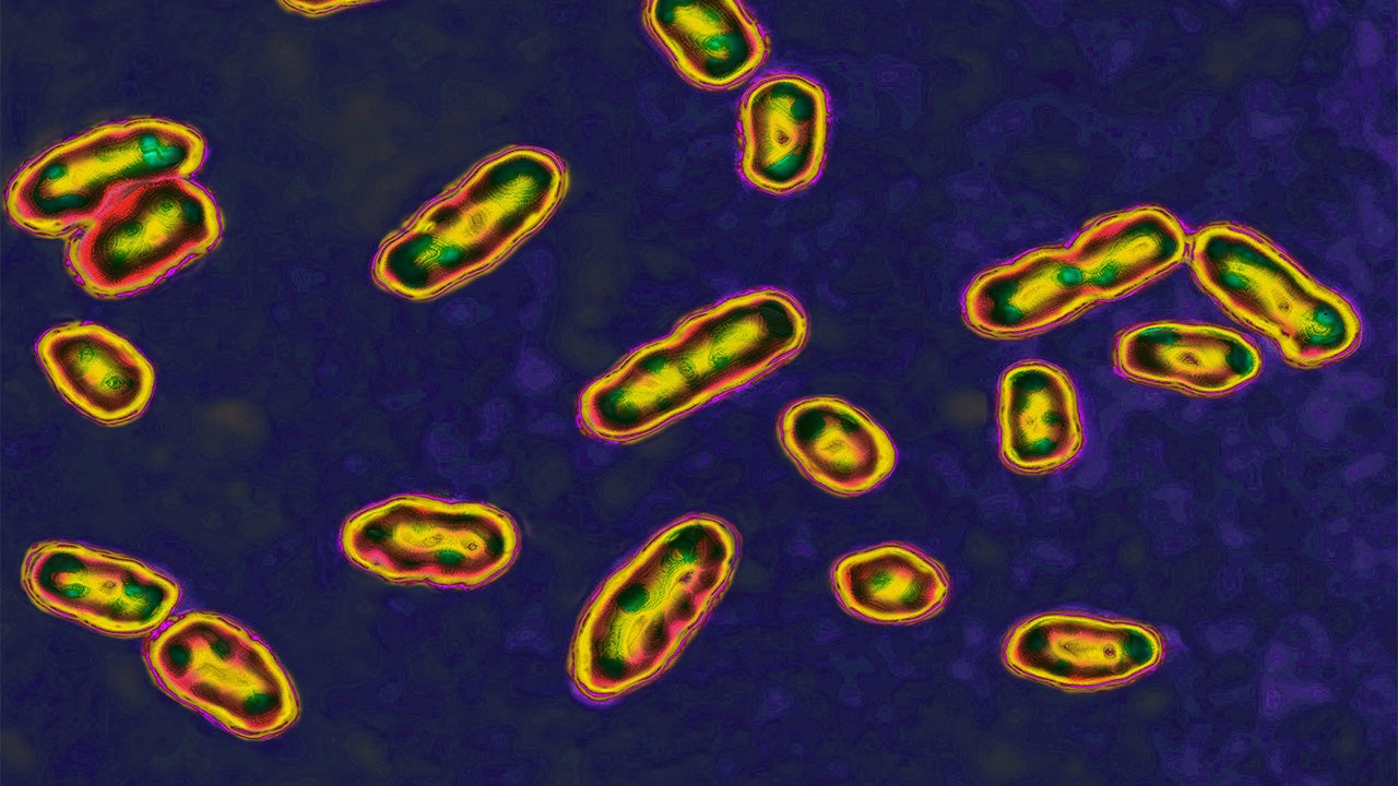 Child in Idaho Recovering From Rare Case of Bubonic Plague