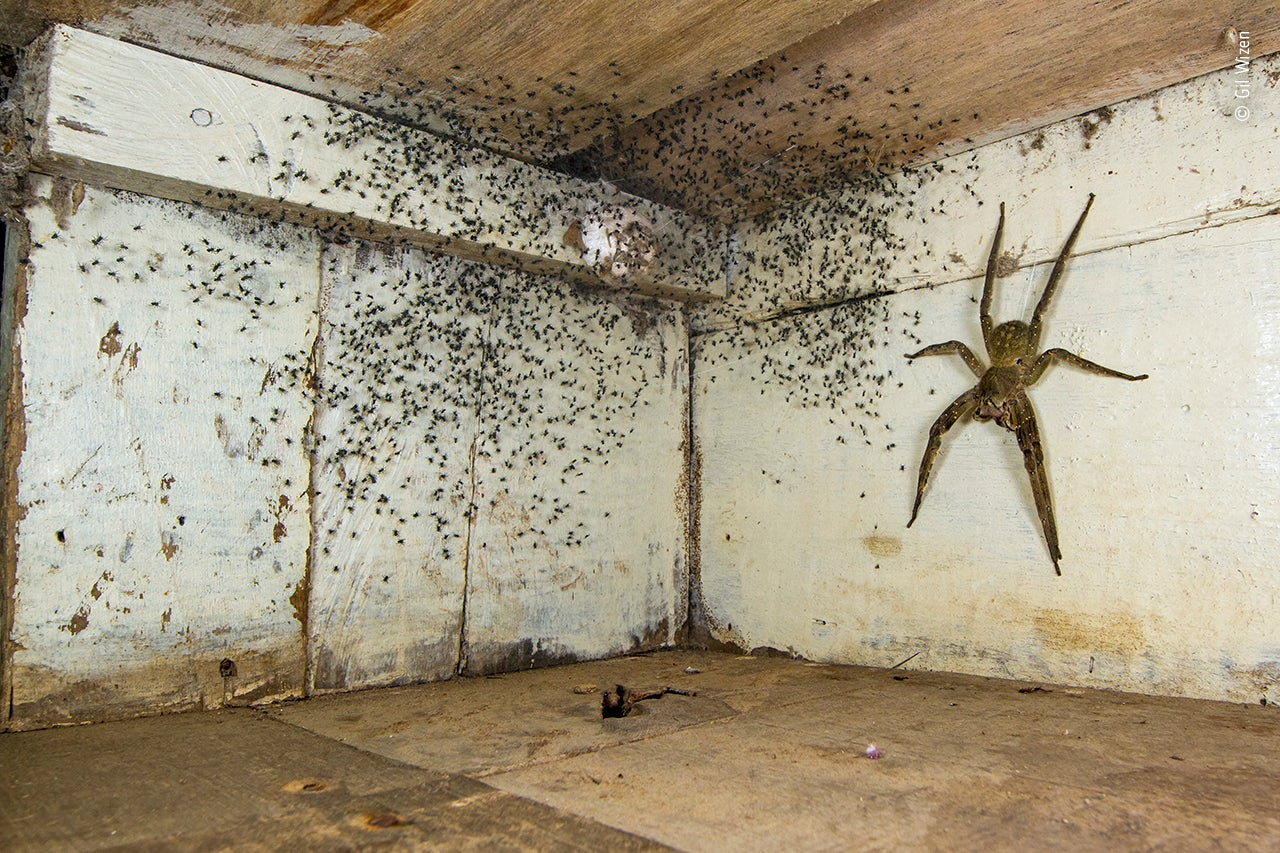 A Spider That Scared the World: Story of a Giant Spider's Viral Picture Named 'The Spider Room' | The Weather Channel - Articles from The Weather Channel | weather.com