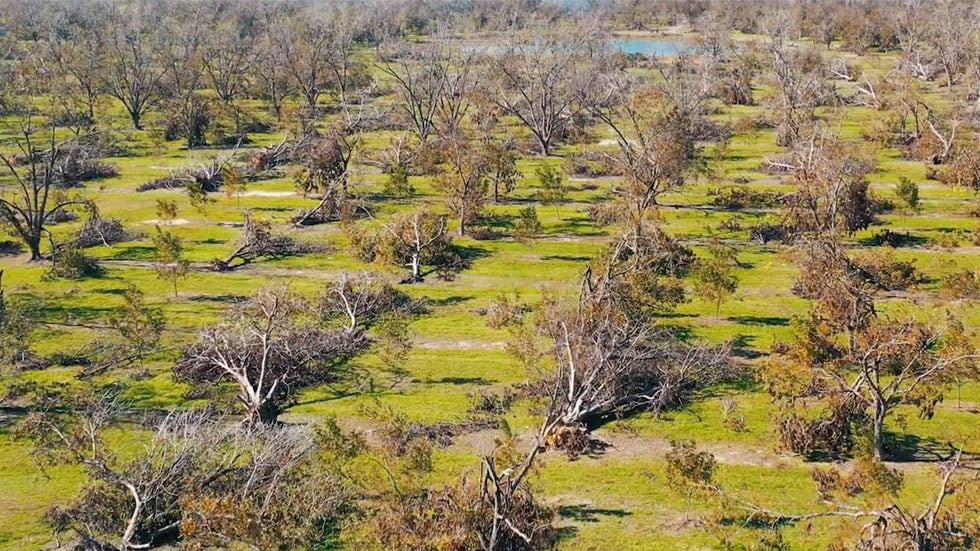 $1B in Timber, $640M in Pecans Wiped Out