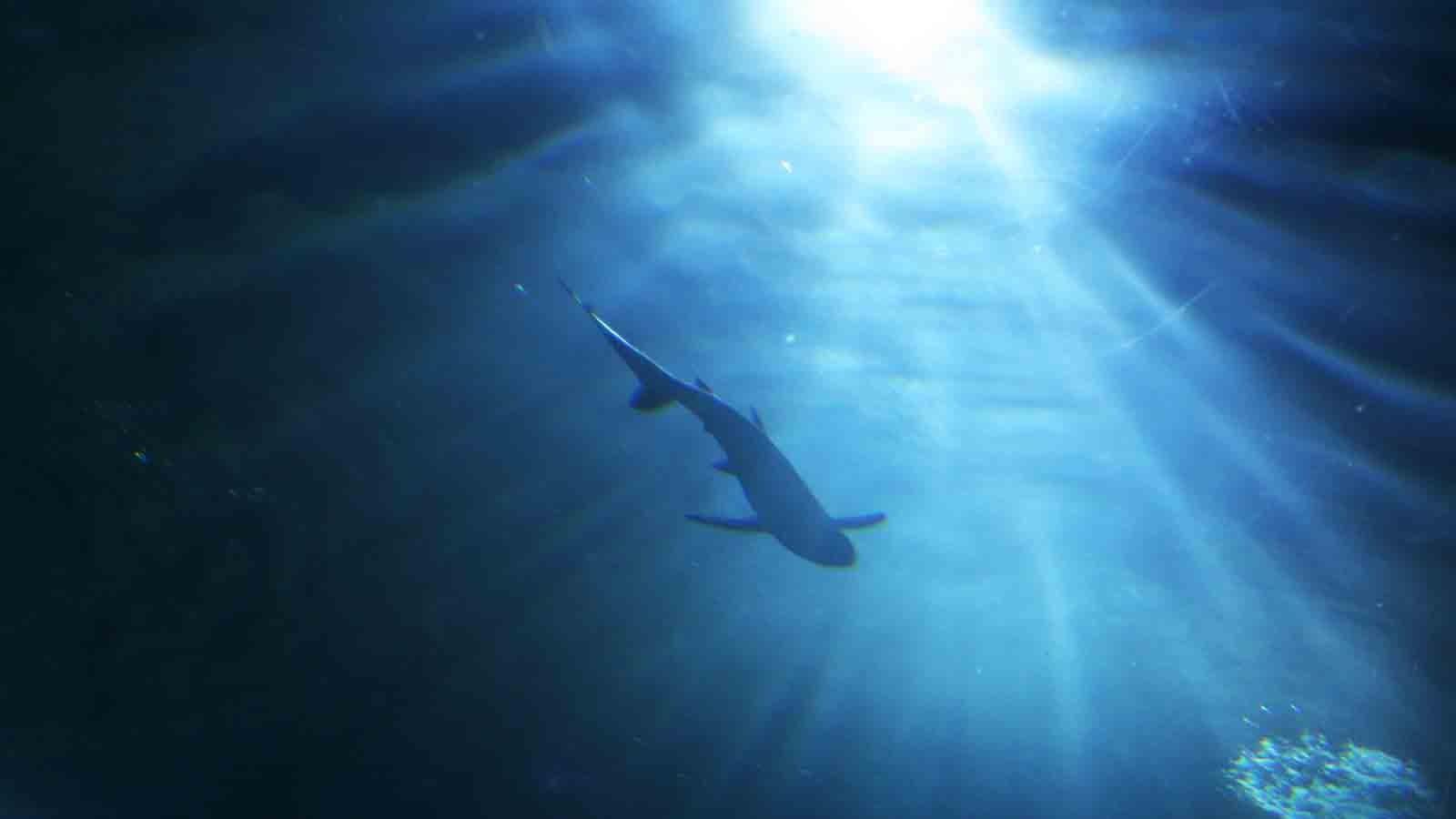 Hai fällt tauchenden 13-Jährigen an und verletzt ihn am Oberkörper