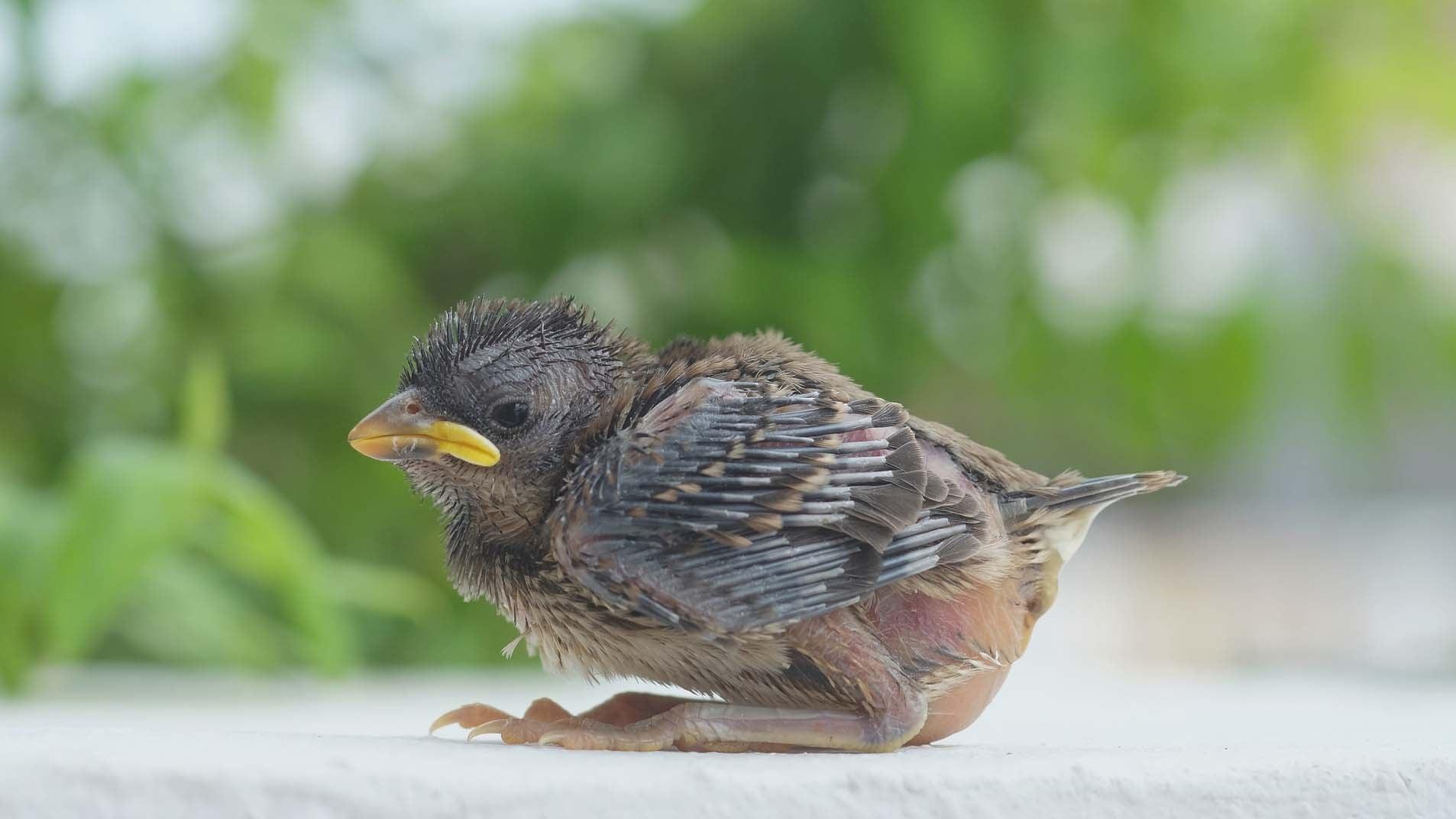 Tierärzte: Jungvögel sind meist nicht auf Hilfe angewiesen