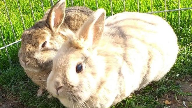 """""""Sind überglücklich"""": Familie bekommt gestohlene Kaninchen zurück"""