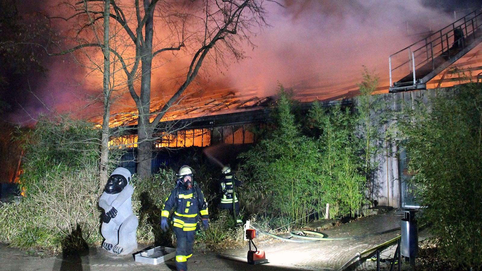 Feuer Zoo Krefeld