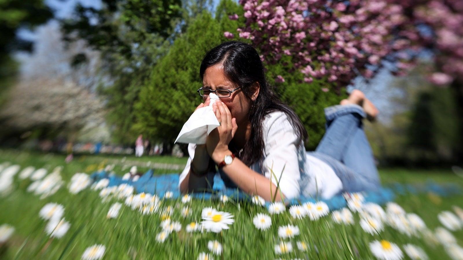 Pollenkalender: Diese Pollen machen Allergikern bald zu schaffen
