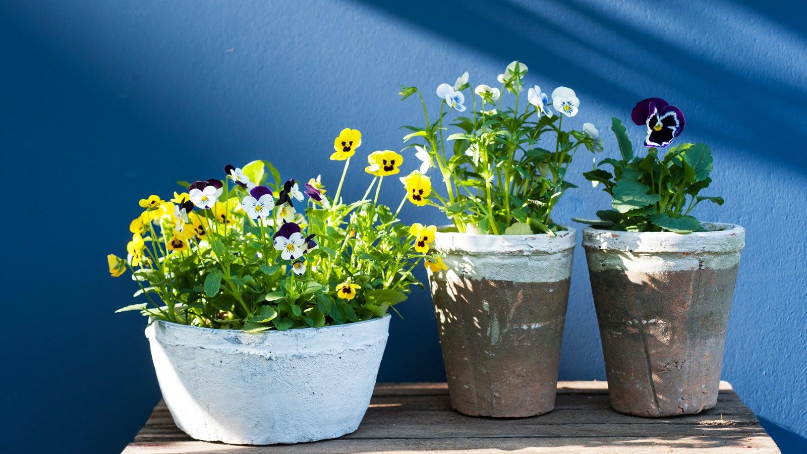 gr ne oase welche pflanzen am besten f r ihren balkon sind the weather channel. Black Bedroom Furniture Sets. Home Design Ideas