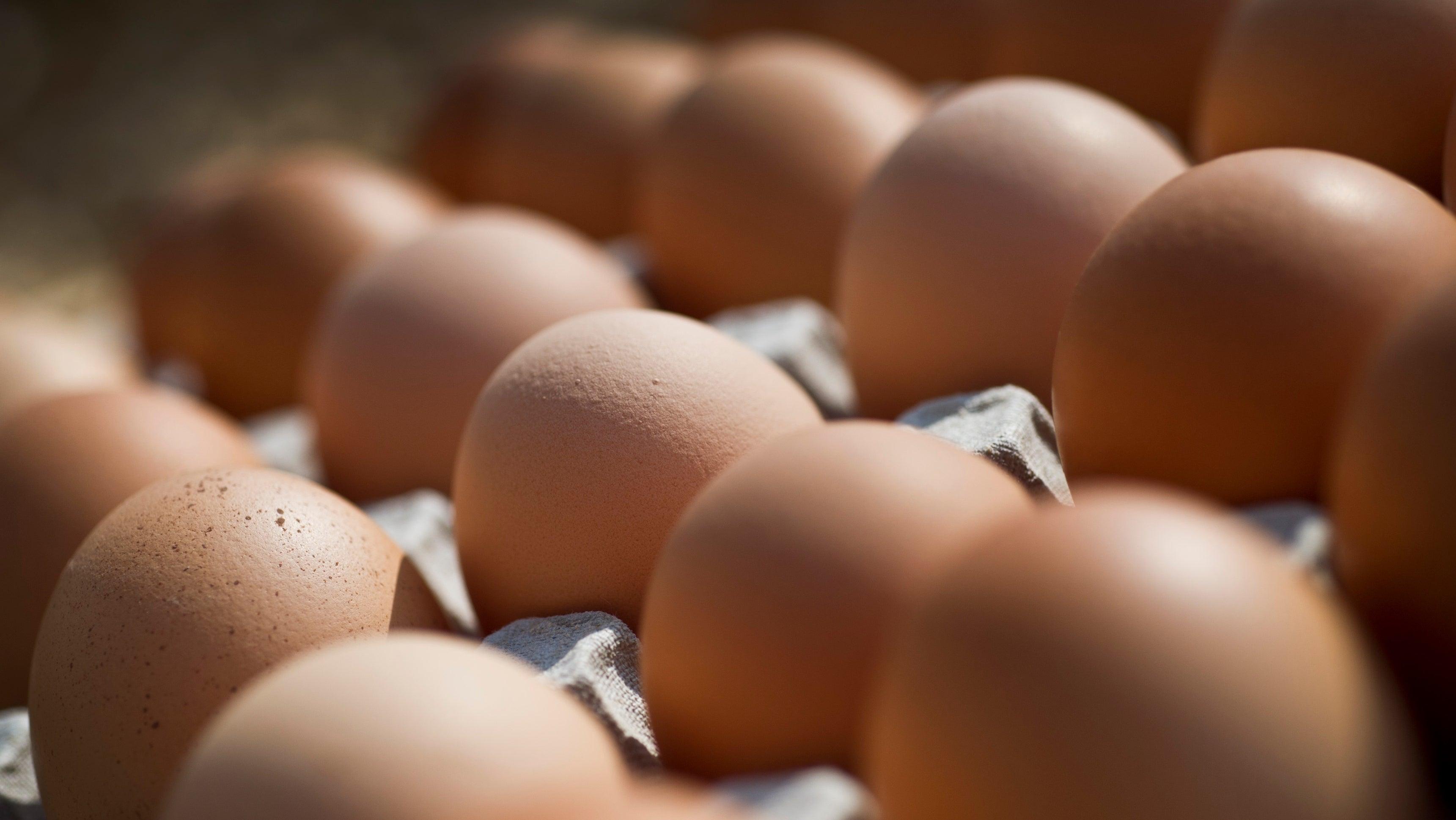 Aldi Kühlschrank 2018 : Salmonellen bio eier von penny kaufland aldi nord aldi süd