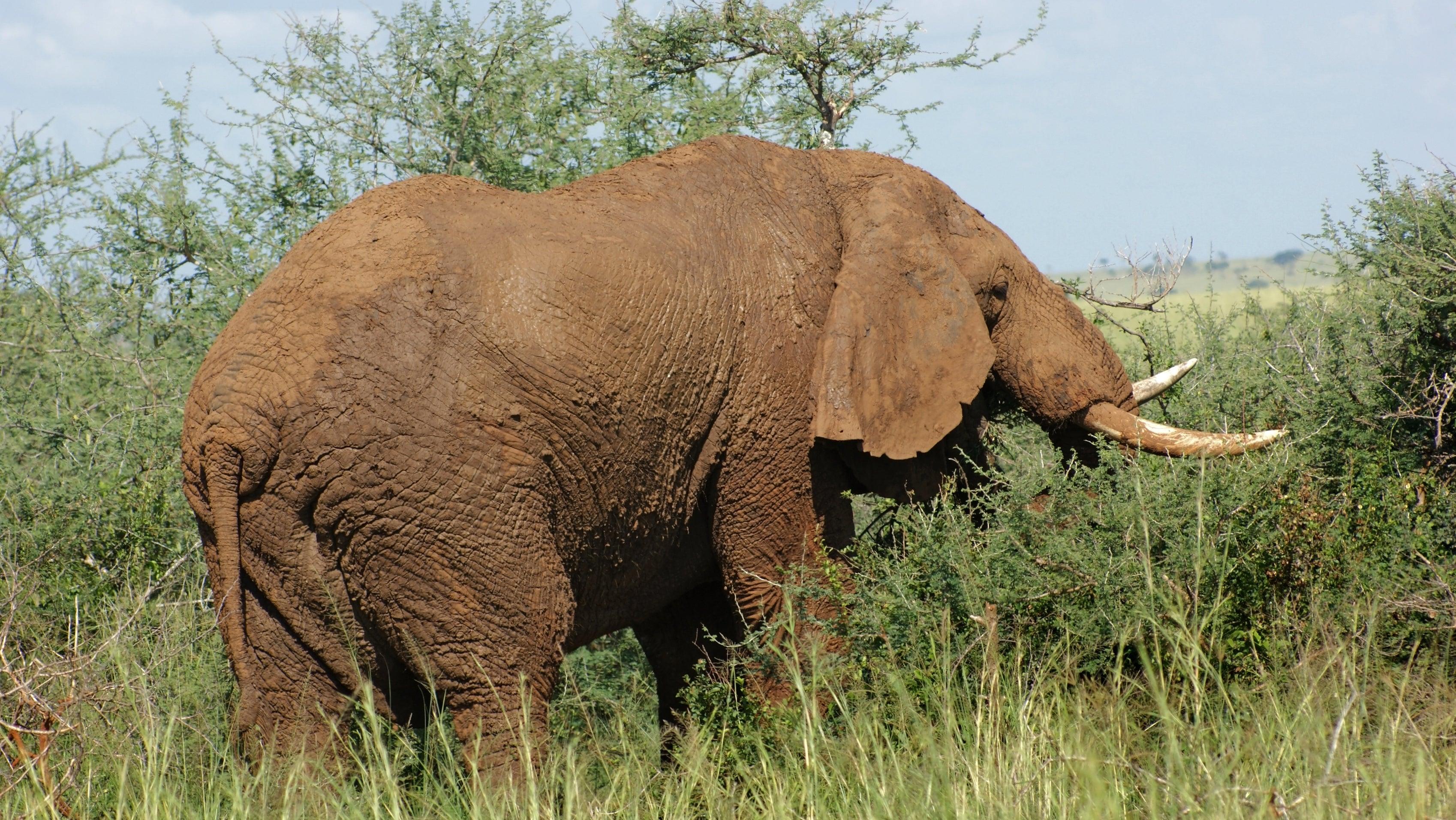 Elefantenbulle attackiert deutschen Urlauber in Simbabwe und verletzt ihn schwer
