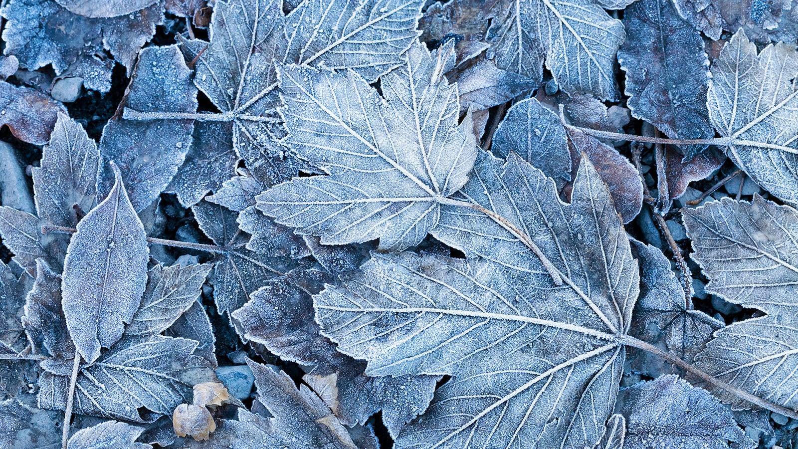 Frost: Wie entstehen eigentlich Luft- und Bodenfrost und was ist der Unterschied?
