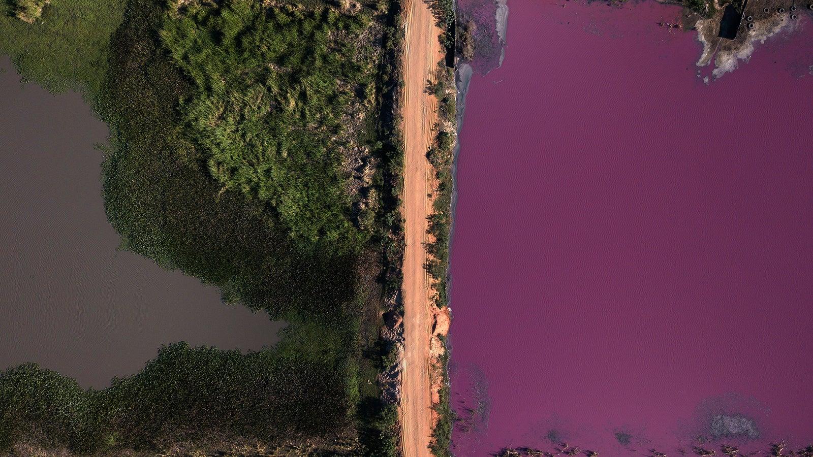 Tiere verenden reihenweise: See wandelt sich zur Lagune des Todes   The Weather Channel