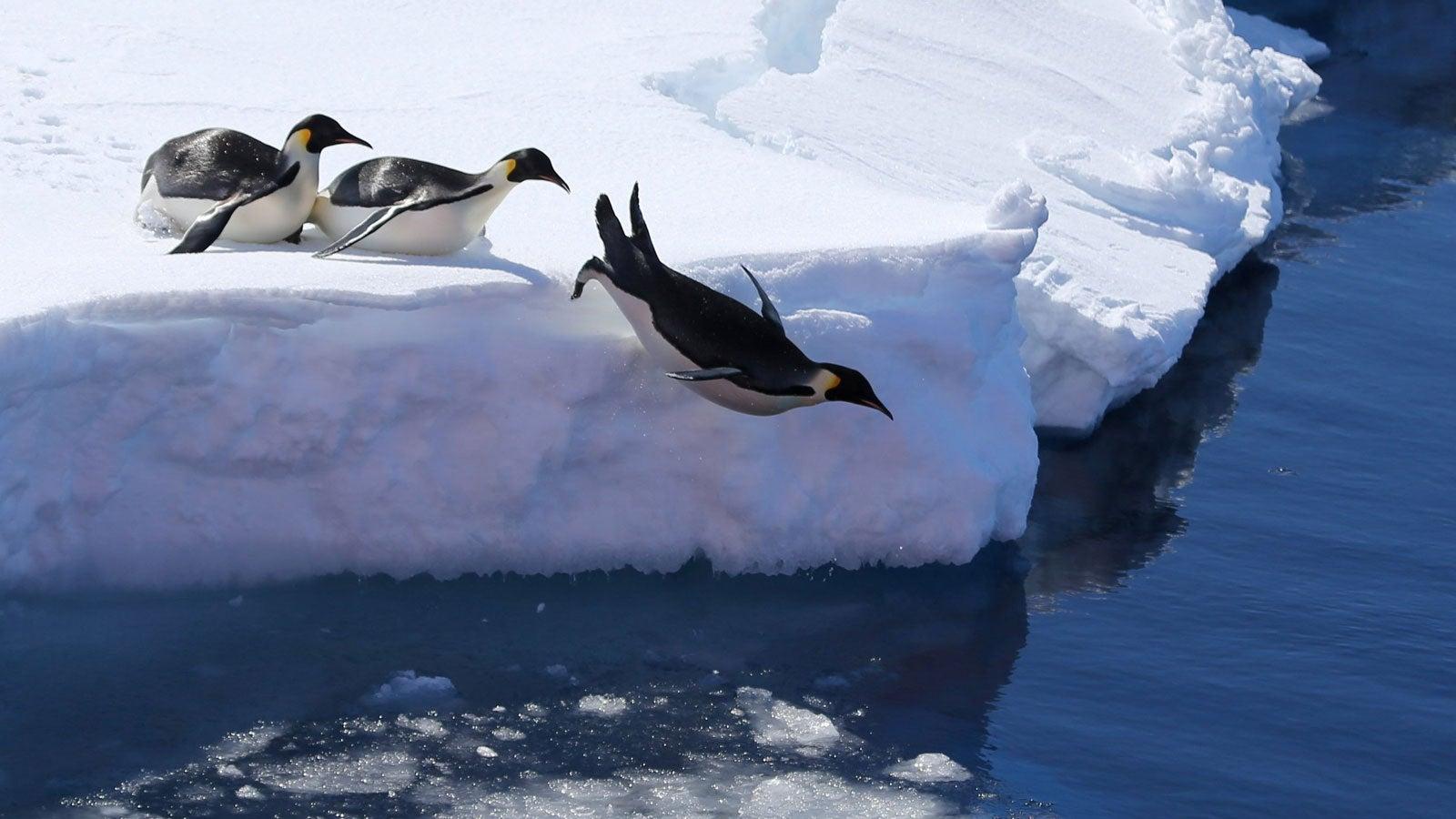 Australien will Flughafen in Antarktis bauen - Forscher befürchten schlimme Folgen | The Weather Channel - Artikel von The Weather Channel | weather.com