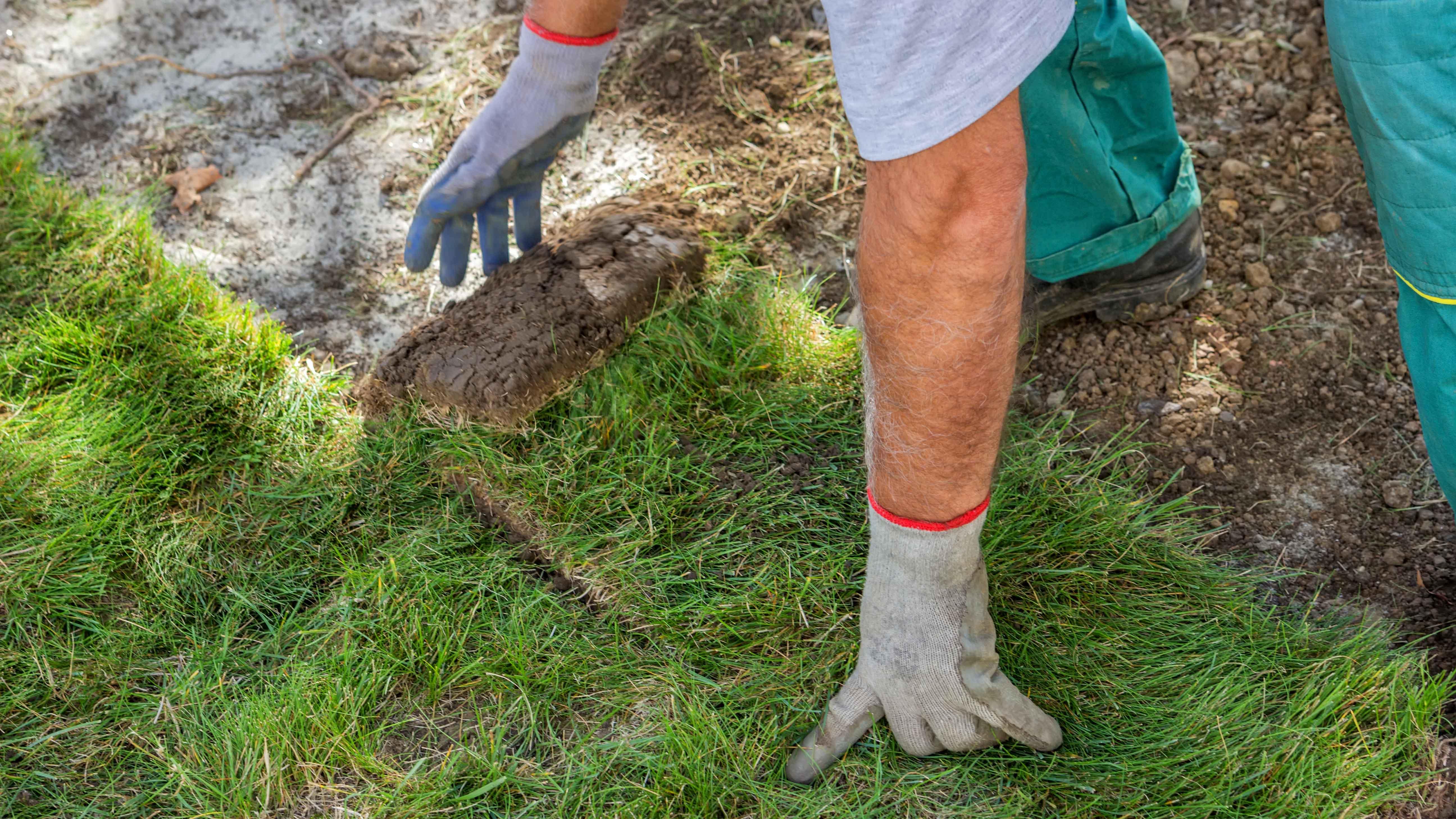 Rollrasen Im Garten Bringt Schnellen Erfolg Hat Aber Auch