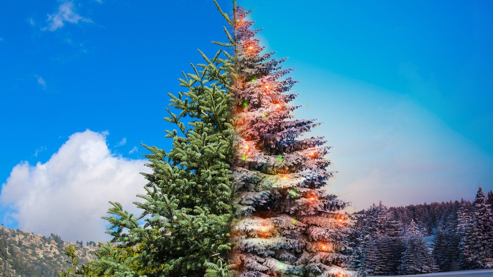 Meteorologin Gibt Ausblick Polarwirbel Konnte Zur Weihnachtszeit