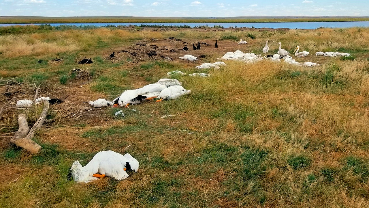 Montana Hailstorm Kills or Injures More Than 11,000 Birds