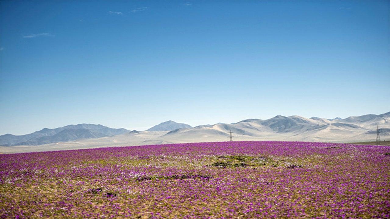 Atacama, un desierto que se convirtió en jardín