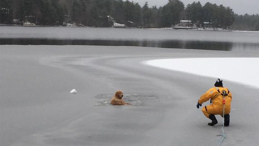 waterboro fire department rescues golden retriever from