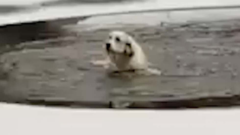 Firefighter Rescues Dog Trapped in Icy Pond