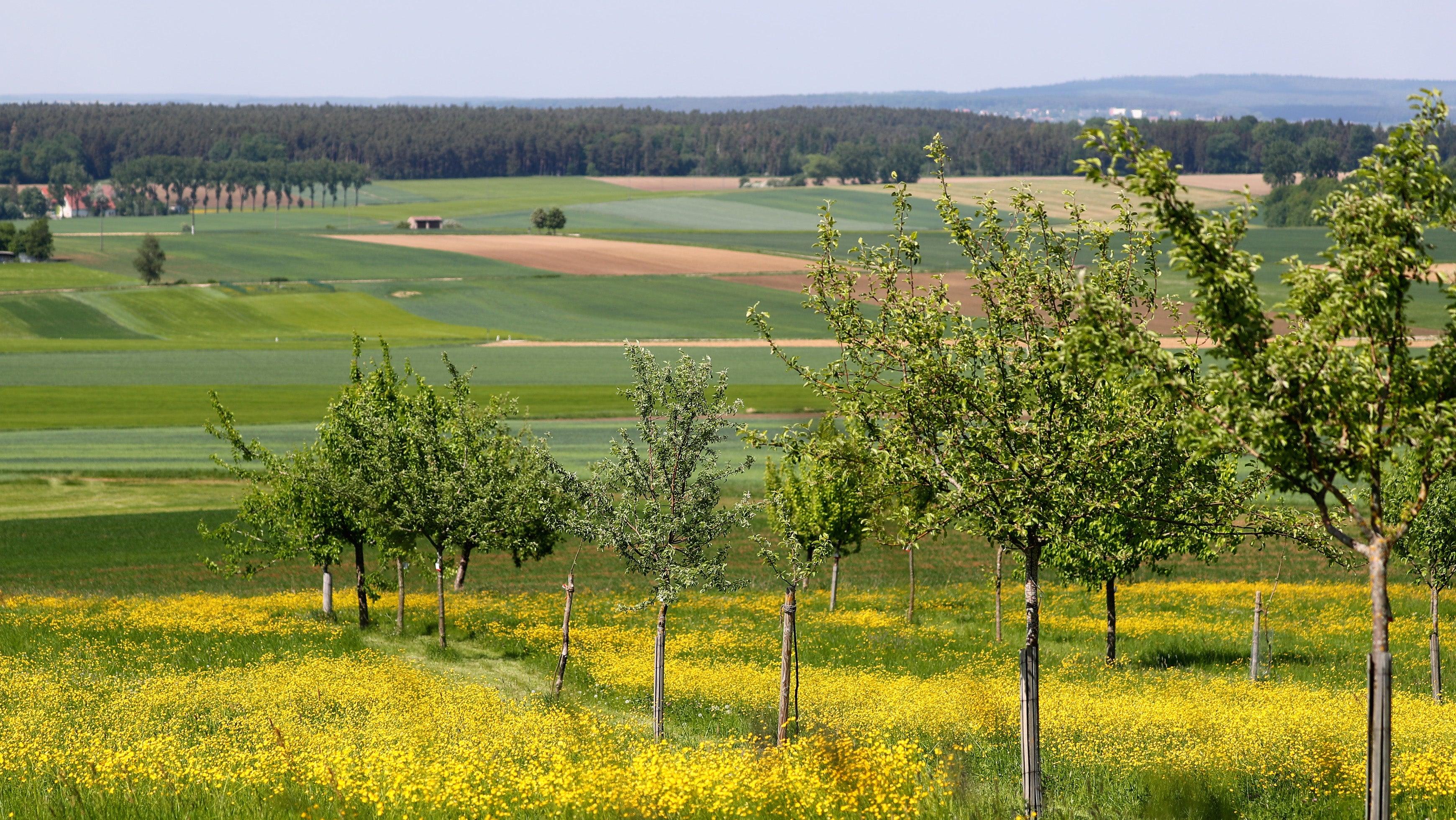 Früher gab es tausende Sorten: Was sie über Äpfel noch nicht wussten