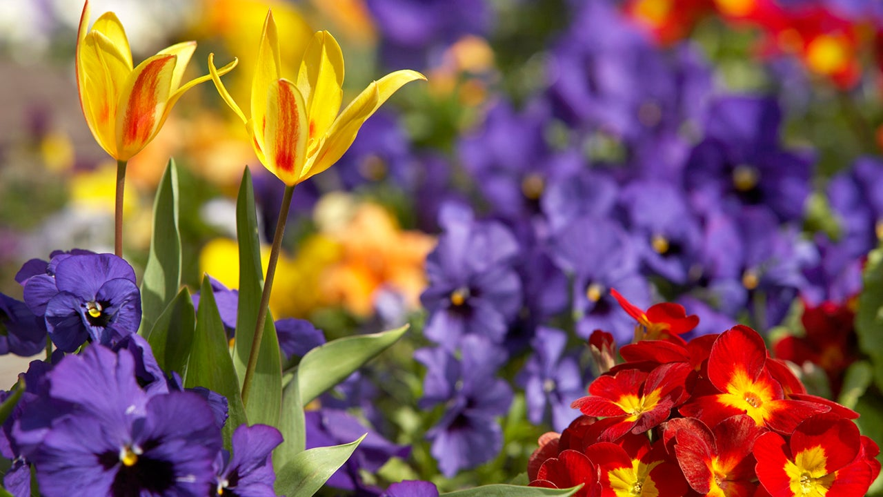 8 Reasons Spring is the BEST Season for Your Health