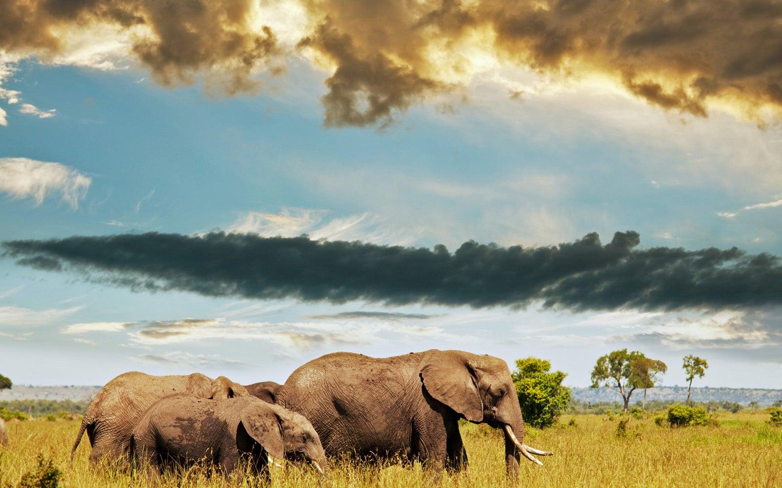 ein gewitter in 240 kilometer entfernung elefanten sp ren. Black Bedroom Furniture Sets. Home Design Ideas